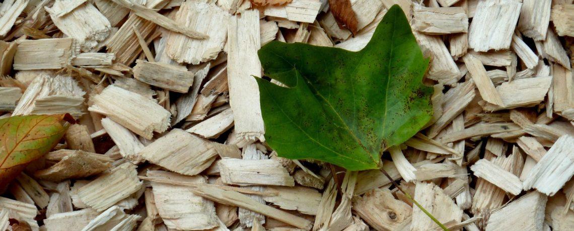Eliminación de residuos de madera y centro de acopio