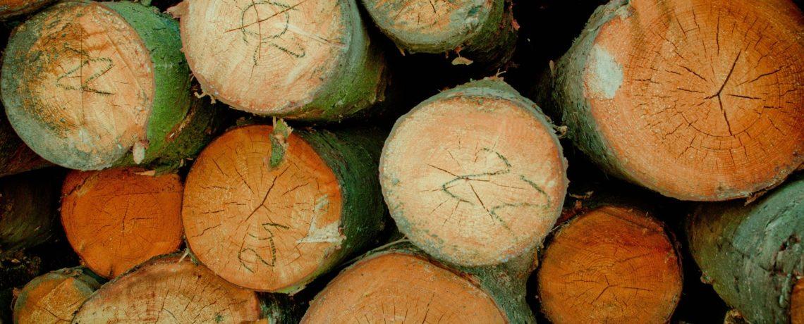 Producción y Comercialización de Biomasa